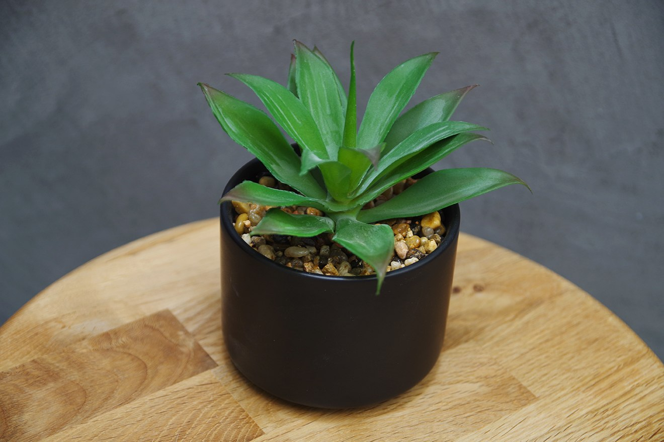 Dragon Tree Fauxtanical Plant Futon Company